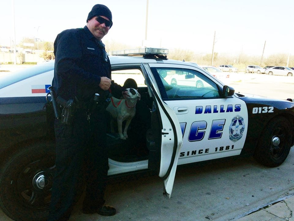 Officer Rescues Stranded Highway Dog and Possibly Adopts Pet