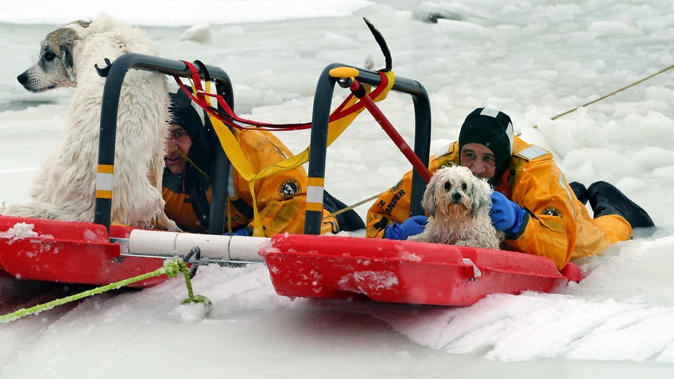 Firefighters Rescue Dogs from Frozen Marsh