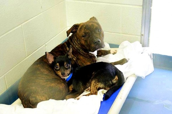 2.11.15 - Bonded Florida Pair Needs a Home1