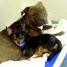 Florida Shelter Dogs Won't Leave Without Each Other