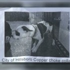 """Dog """"Liberated"""" for Second Time from Local Pound in Missouri"""