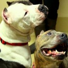Bonded Indiana Sisters Need a Place to Call Home