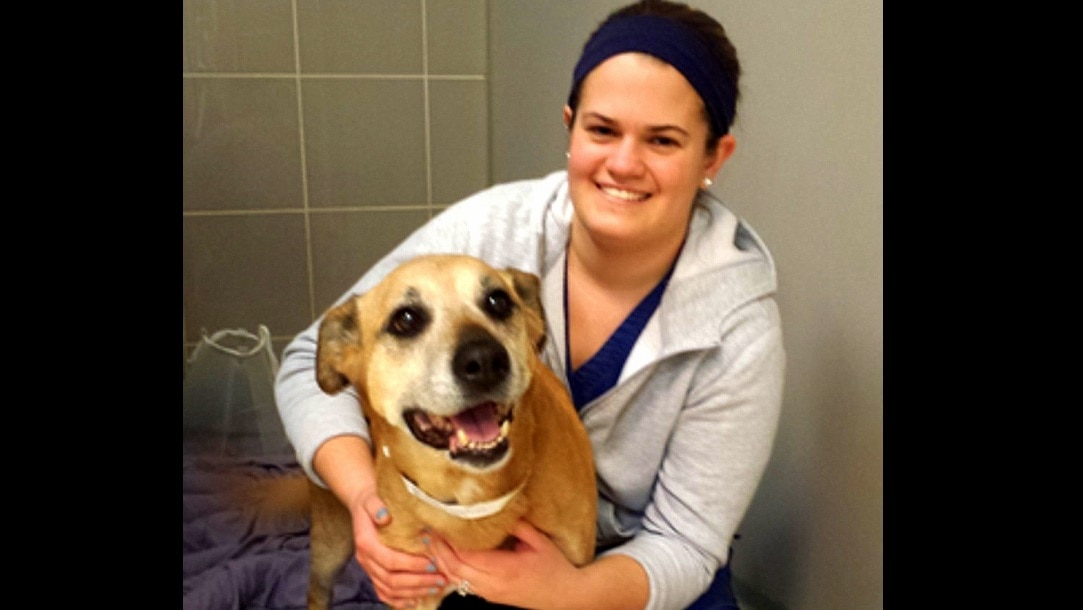 Vet Removes an Eleven-Pound Tumor from Dog