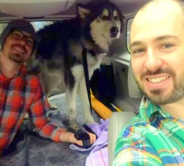 2.12.15 - Emaciated Husky Rescued After Eating Gravel to Survive3