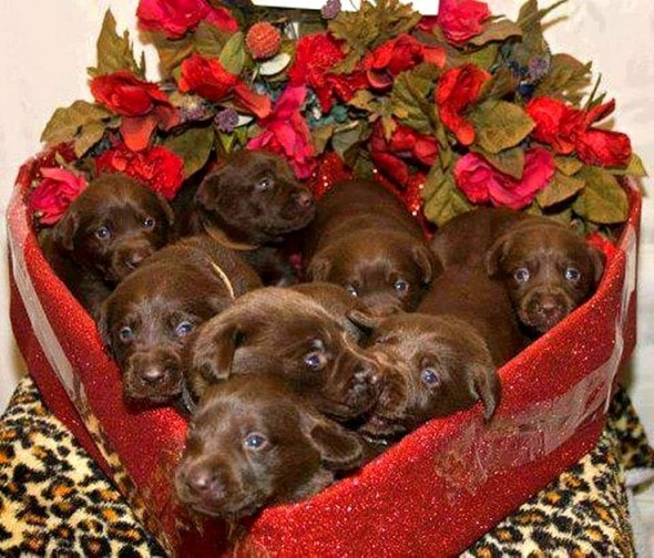 2.13.15 - Reasons Why Your Dog Will Be the Best Valentine1