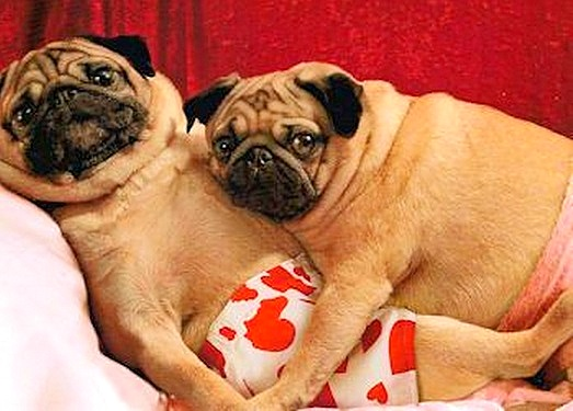 Image result for VALENTINE DAY DOGS