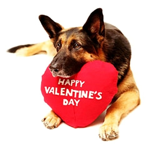 warming up for tonight meme valentines day - Dogs Who Can t Wait to Be Your Valentine