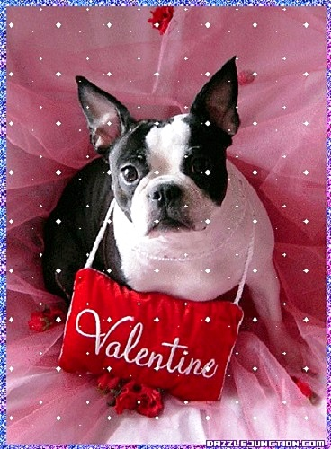 Good Valentine Bow Adorable Dog - 2  HD_708275  .jpg