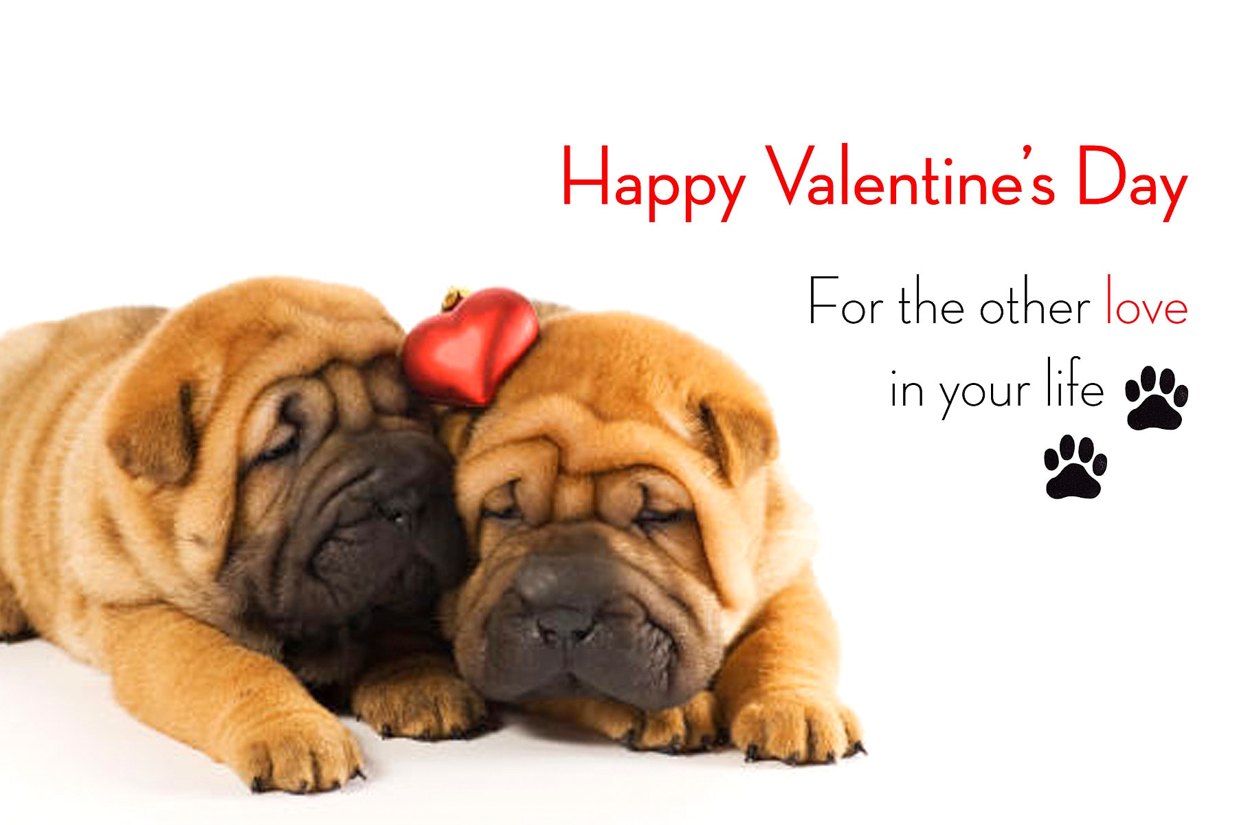 Dogs who can 39 t wait to be your valentine life with dogs - Valentines day pictures with puppies ...
