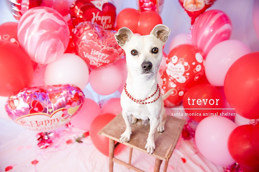 Dogs who can 39 t wait to be your valentine life with dogs - Valentine s day animal pics ...