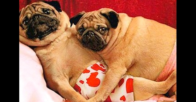 Dogs Who Can't Wait to Be Your Valentine