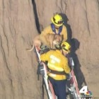 Firefighters Scramble to Rescue Dog Stuck on Cliff Side