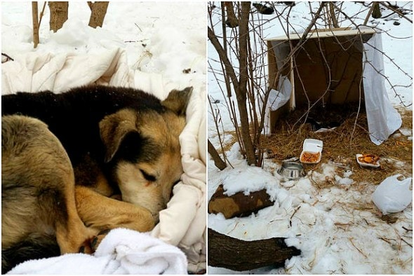 2.19.15 - Woman Sleeps in NYC Park to Save Senior Feral Dog4