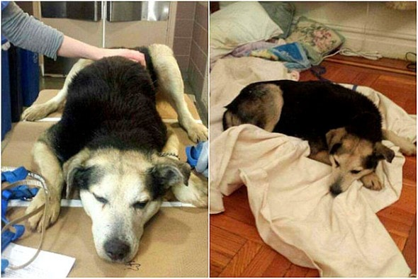 2.19.15 - Woman Sleeps in NYC Park to Save Senior Feral Dog5