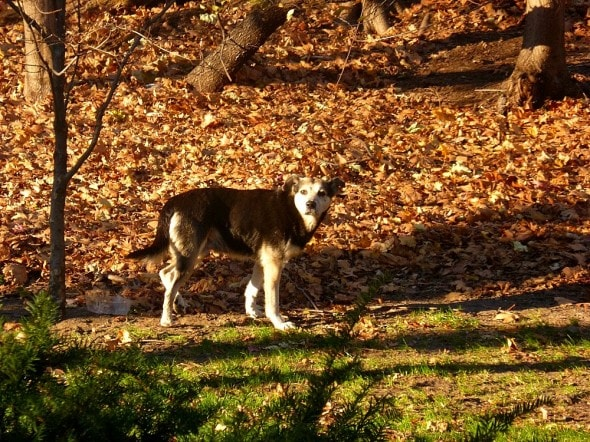2.19.15 - Woman Sleeps in NYC Park to Save Senior Feral Dog7