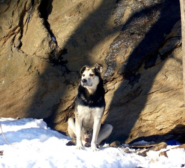 2.19.15 - Woman Sleeps in NYC Park to Save Senior Feral Dog9