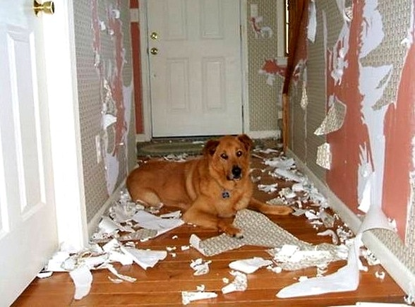 2.20.15 - Dogs Who Are Proud They Trashed Your House1
