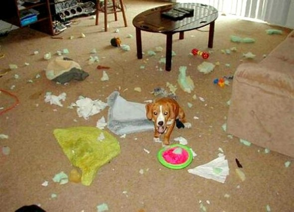 2.20.15 - Dogs Who Are Proud They Trashed Your House11