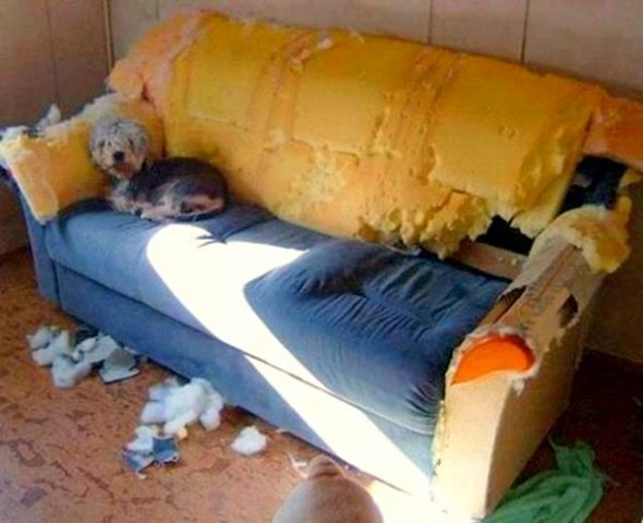 2.20.15 - Dogs Who Are Proud They Trashed Your House12