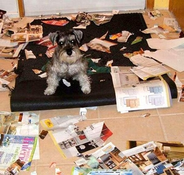 2.20.15 - Dogs Who Are Proud They Trashed Your House13