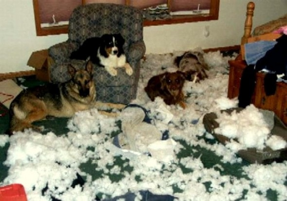 2.20.15 - Dogs Who Are Proud They Trashed Your House15