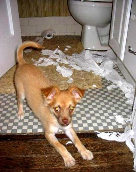 2.20.15 - Dogs Who Are Proud They Trashed Your House17