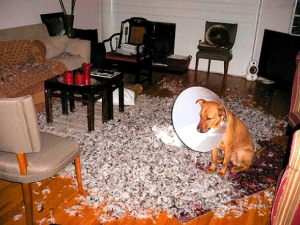 2.20.15 - Dogs Who Are Proud They Trashed Your House18