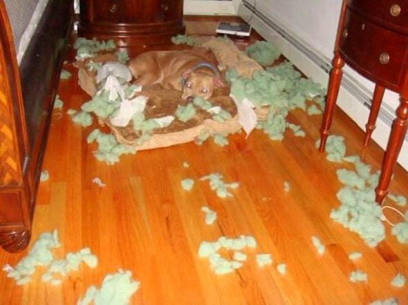 2.20.15 - Dogs Who Are Proud They Trashed Your House19
