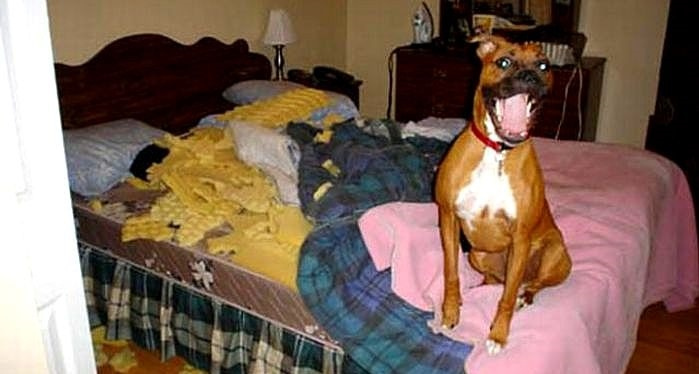 Dogs Who Are Totally Happy They Destroyed Your House