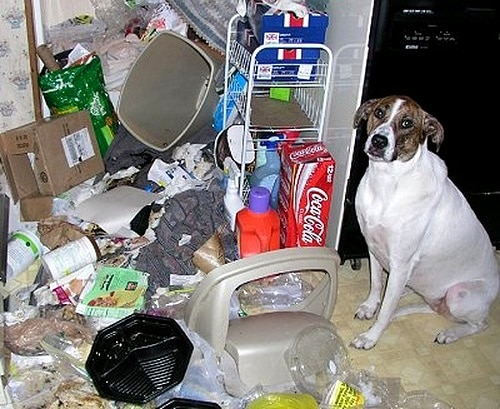 2.20.15 - Dogs Who Are Proud They Trashed Your House3