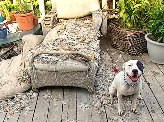 2.20.15 - Dogs Who Are Proud They Trashed Your House4