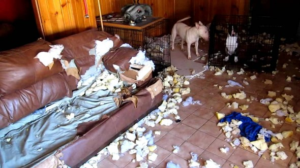 2.20.15 - Dogs Who Are Proud They Trashed Your House6