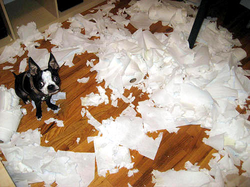 2.20.15 - Dogs Who Are Proud They Trashed Your House7