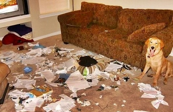 2.20.15 - Dogs Who Are Proud They Trashed Your House9