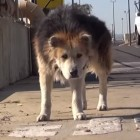 Hope for Paws Rescues Dog from Water Treatment Plant