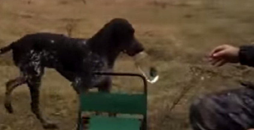 Dog Elevates Fetch to new Heights