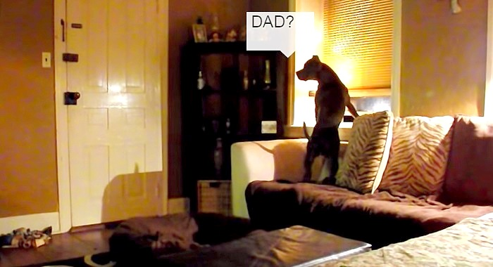 What a Dog Thinks When He's Left Home Alone