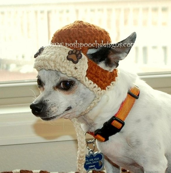 2.26.15 - Dogs Who Are NOT Happy About Their Hats10