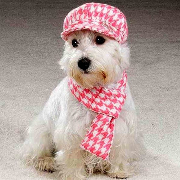 2.26.15 - Dogs Who Are NOT Happy About Their Hats12