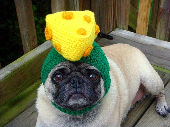 2.26.15 - Dogs Who Are NOT Happy About Their Hats13