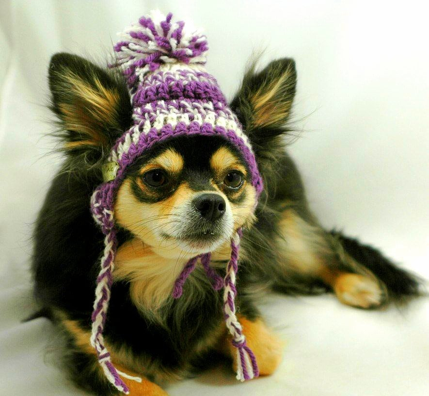 Dog Hat Knitting Pattern Free : Dogs Who Are NOT Amused with Their New Hats
