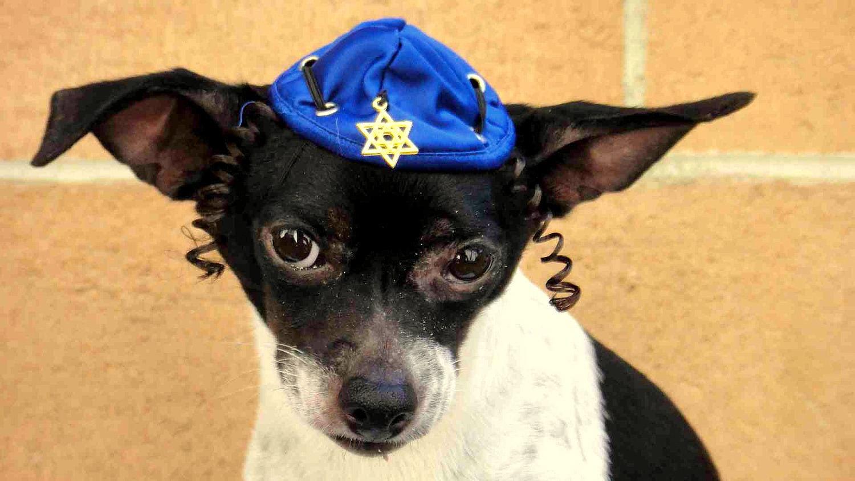Happy Hanukkah Dog Pictures
