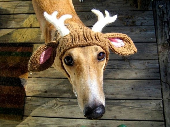 2.26.15 - Dogs Who Are NOT Happy About Their Hats18