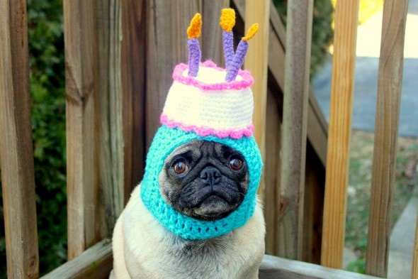 2.26.15 - Dogs Who Are NOT Happy About Their Hats19