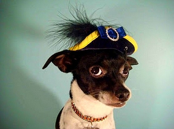 2.26.15 - Dogs Who Are NOT Happy About Their Hats20