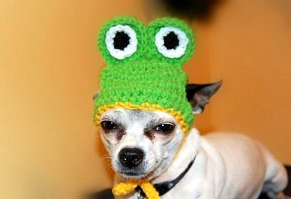 2.26.15 - Dogs Who Are NOT Happy About Their Hats21