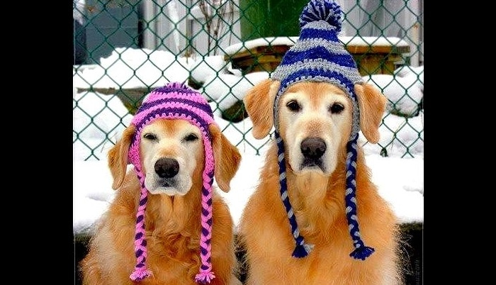 Dogs Who Are NOT Amused with Their New Hats