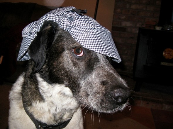 2.26.15 - Dogs Who Are NOT Happy About Their Hats3
