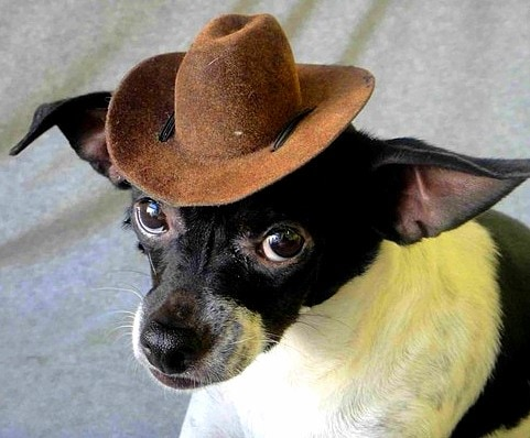 2.26.15 - Dogs Who Are NOT Happy About Their Hats5
