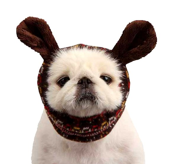 2.26.15 - Dogs Who Are NOT Happy About Their Hats7